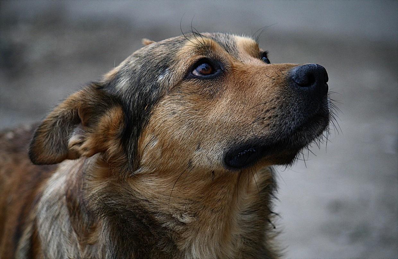 За неделю в городе отловлено 32 собаки