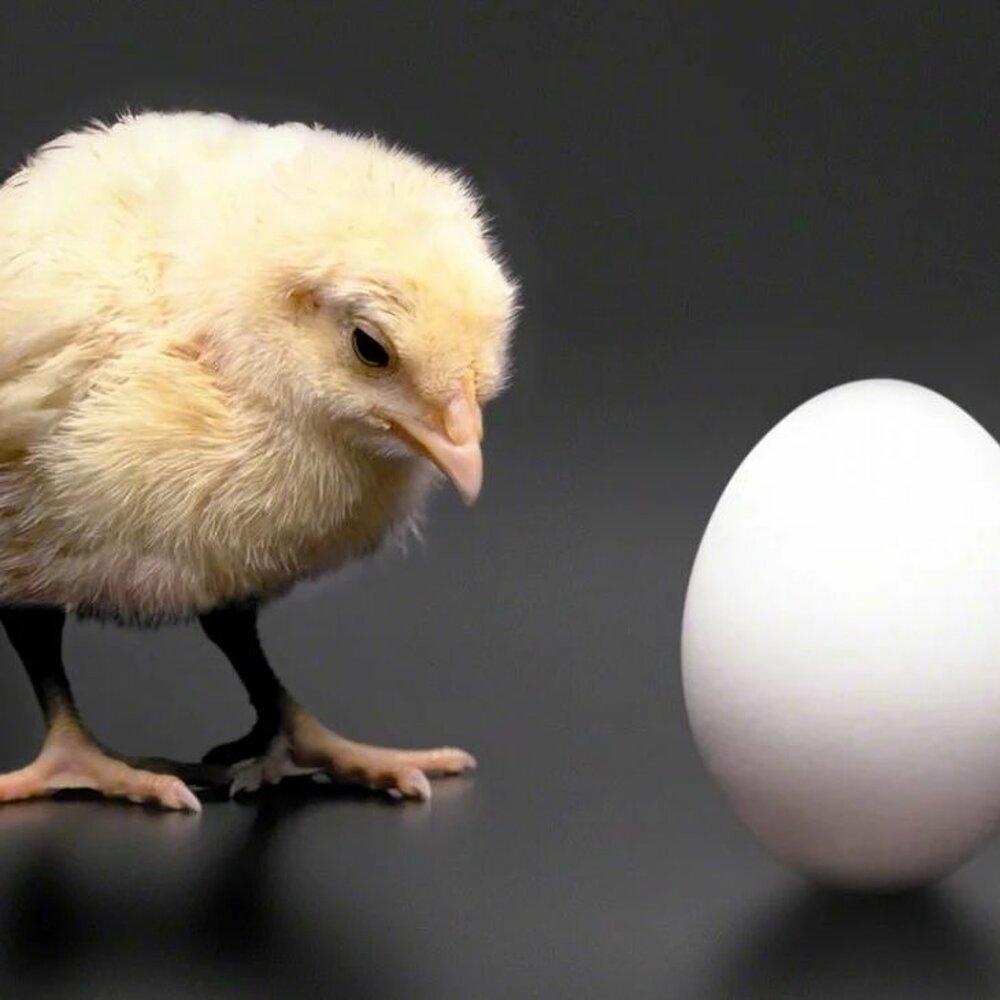Мартовская инфляция или почему подорожали яйца
