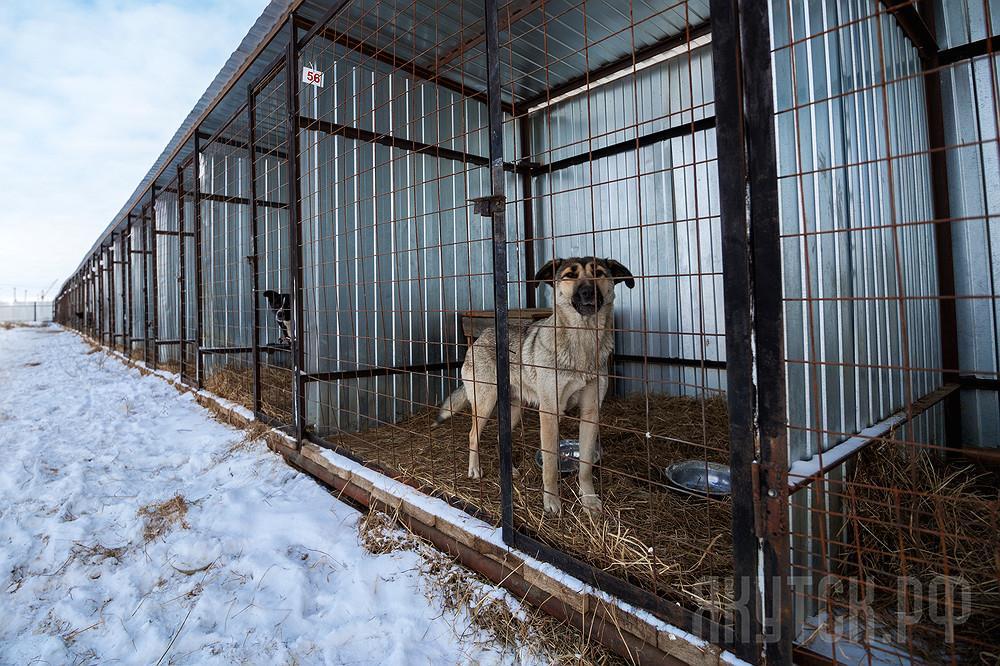 Из пункта передержки животных Якутска забрали 37 собак. И причина не в доброте