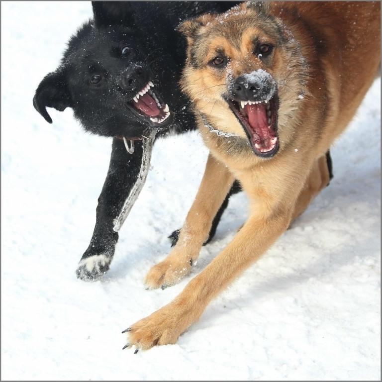 За три месяца собаки покусали 113 человек