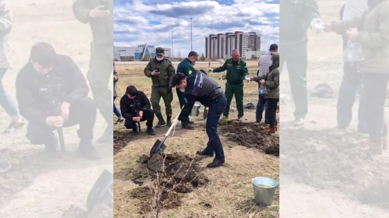 В Парке Победы посадили деревья
