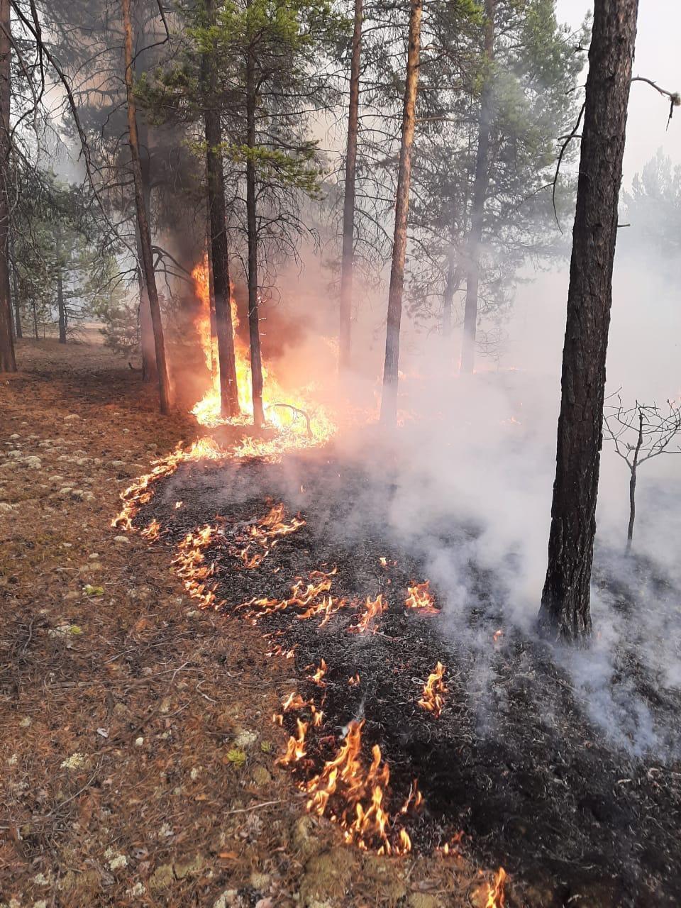 В республике действует 15 природных пожаров