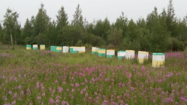 Потомственный пчеловод из Сибири: «Мед в Якутии удивительный»