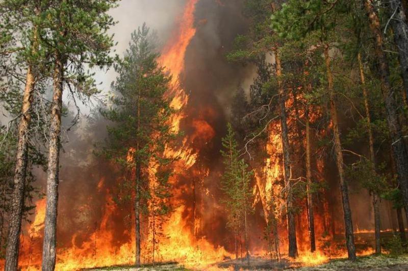 В Якутии введен режим чрезвычайной ситуации из-за лесных пожаров