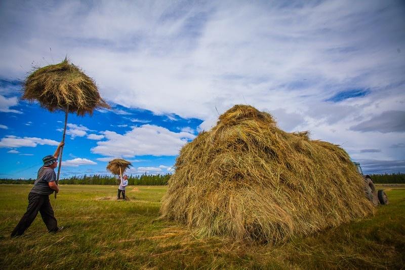 Рассмотренход реализации плана по заготовке сена