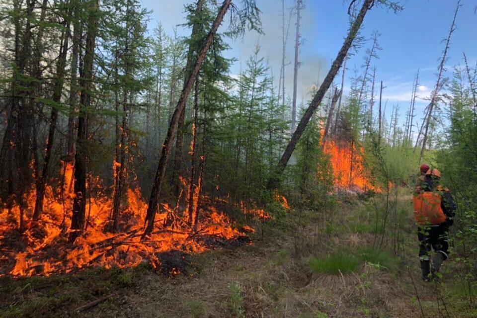 51 природный пожар действует в Якутии