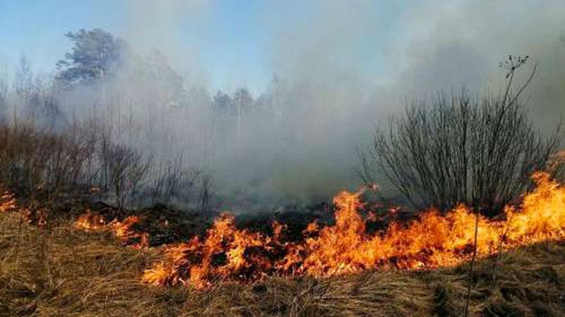 В Якутии за сутки тушат 9 лесных пожаров