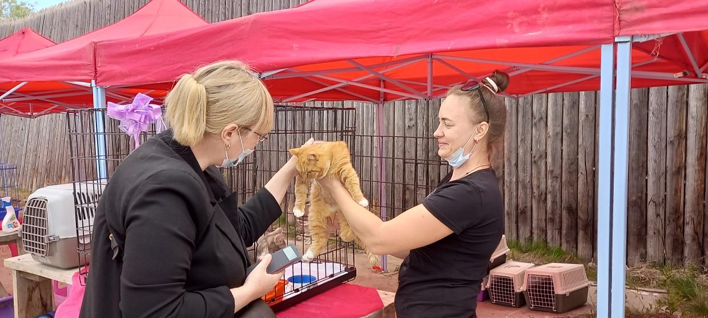 Помоги выжить бездомным животным в Якутске
