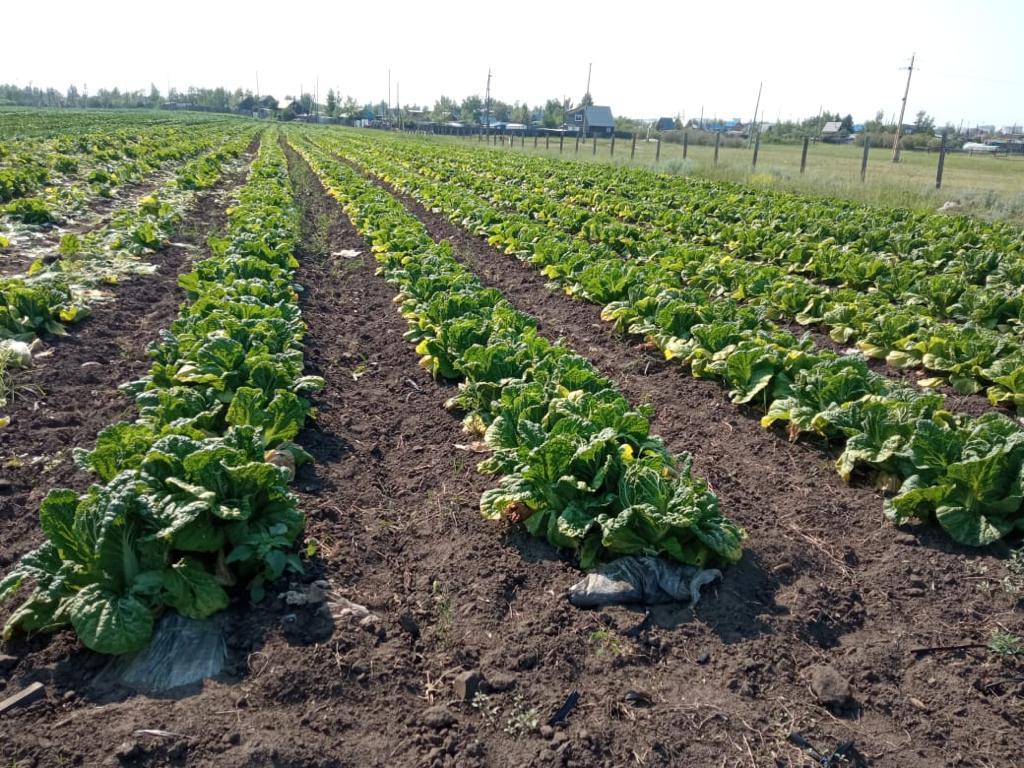 Сельхозпроизводителям Якутска выделено свыше 20 миллионов