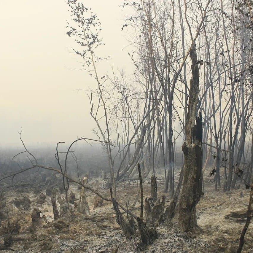 Парк «Ленские столбы» попросил о помощи в тушении пожара