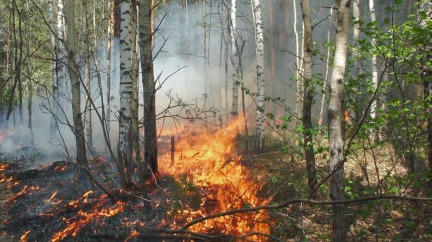 О ситуации с лесными пожарами в Намском, Кобяйском, Горном улусах Якутии