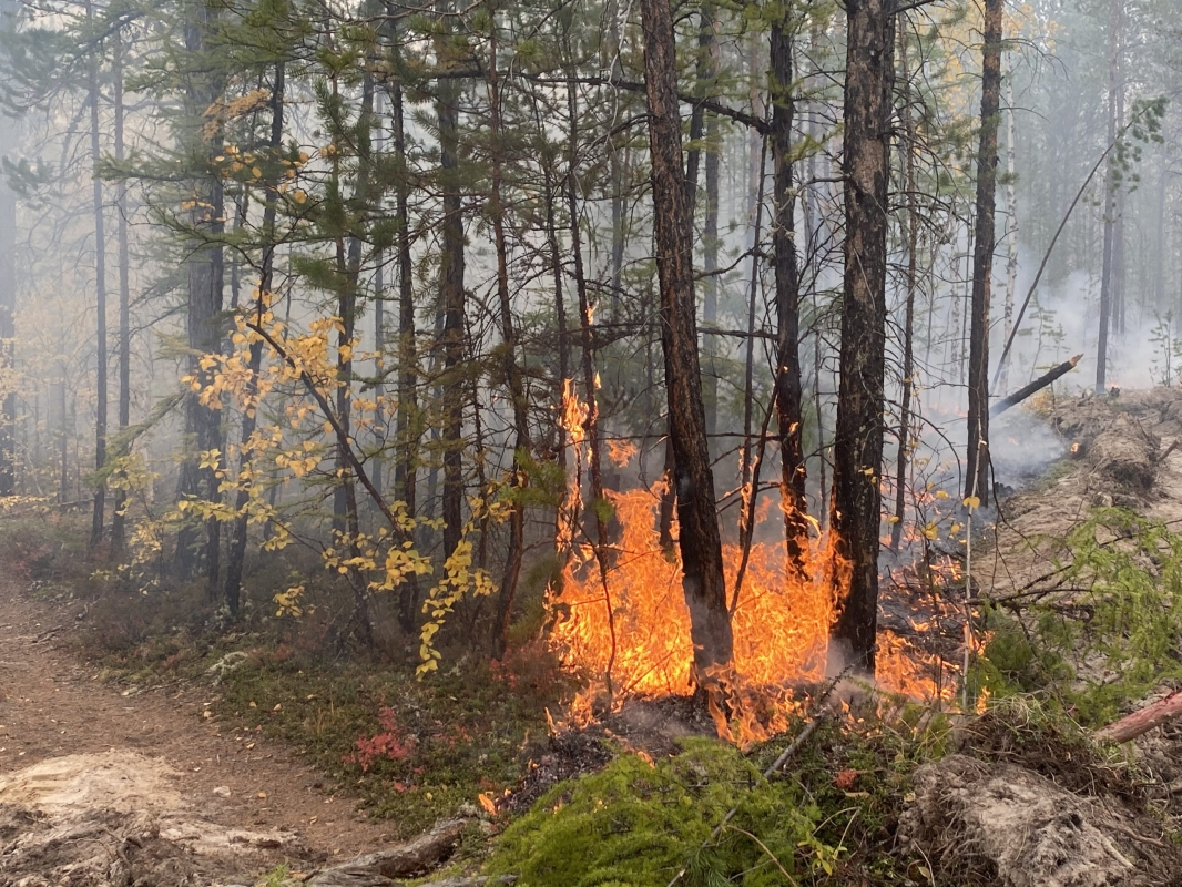 В 12 районах Якутии сохраняется сложная лесопожарная обстановка