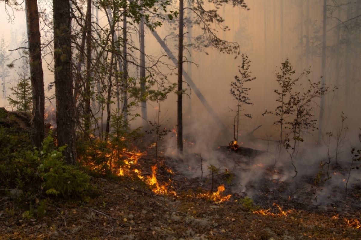 Первый день за лето, когда в Якутии лесной пожар не угрожает селам