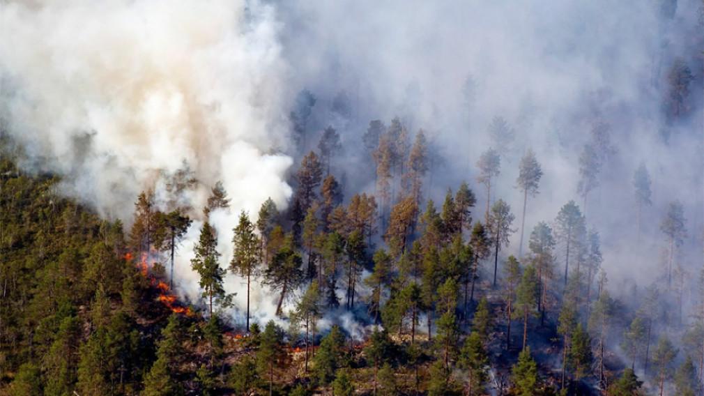 Сложная лесопожарная обстановка сохраняется в Усть-Майском районе Якутии