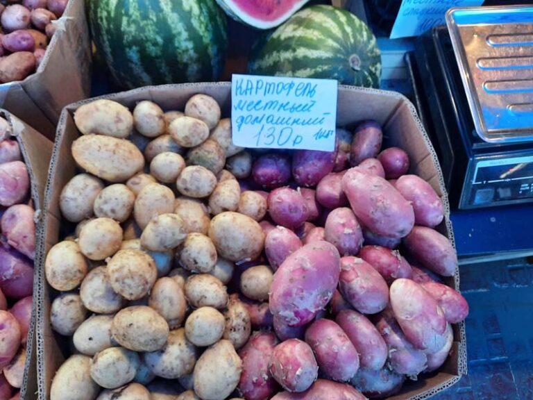 Почему в Якутске картофель подорожал, и cнизятся ли цены в сентябре — рассказывают фермеры