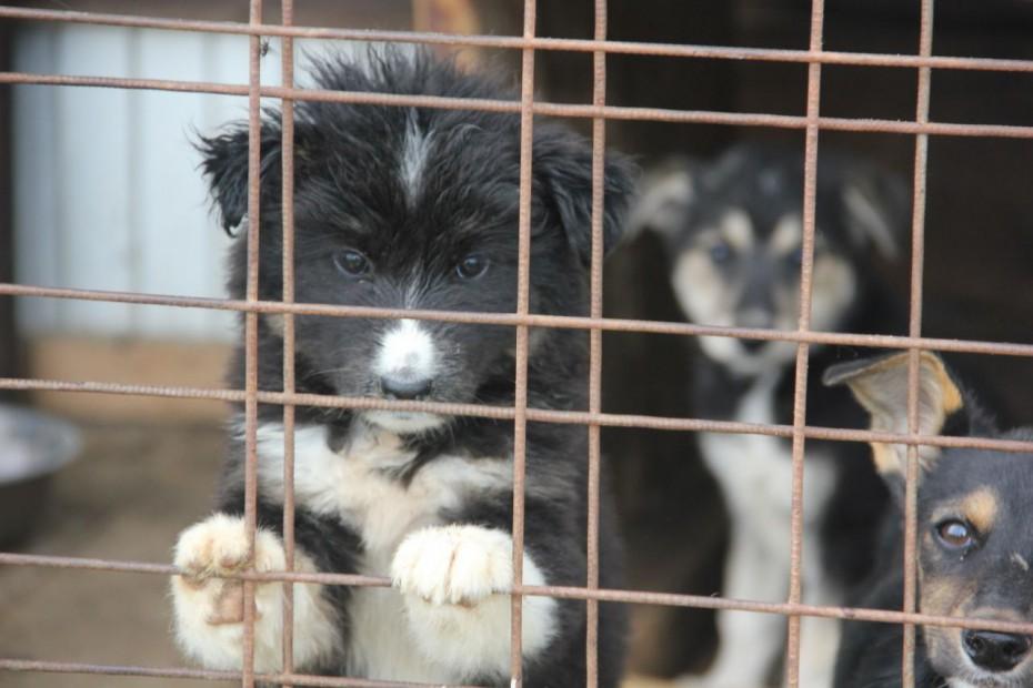 В Якутске наблюдается сезонный рост количества бездомных собак