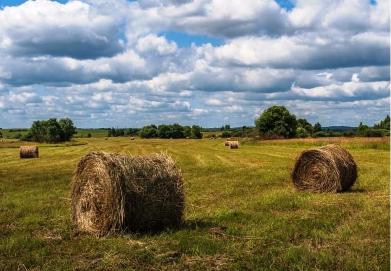 Власти Якутска предоставят фермерам беспроцентные займы на заготовку сена