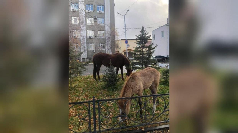 В Якутске планируют организовать штрафстоянку для лошадей