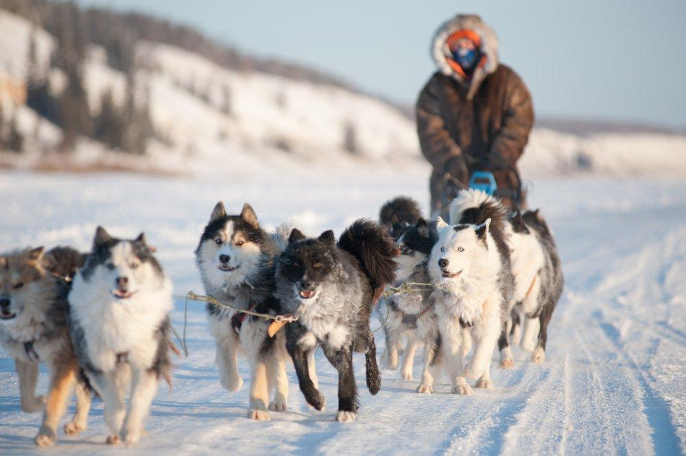 VC и DataArt уверены, что зимой по Якутии путешествуют на ездовых собаках