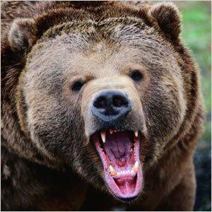 Медведь-людоед  напал на оленеводов