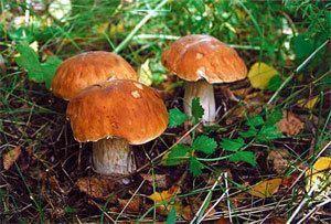 Якутяне вышли по грибы