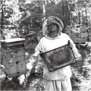 Хранитель якутского мёда