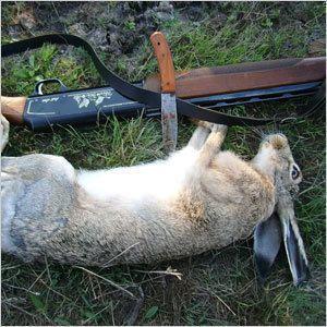 Охота на зайцев и оленей запрещена!