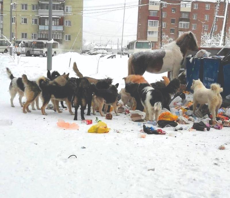 Корь, собаки  и новые назначения