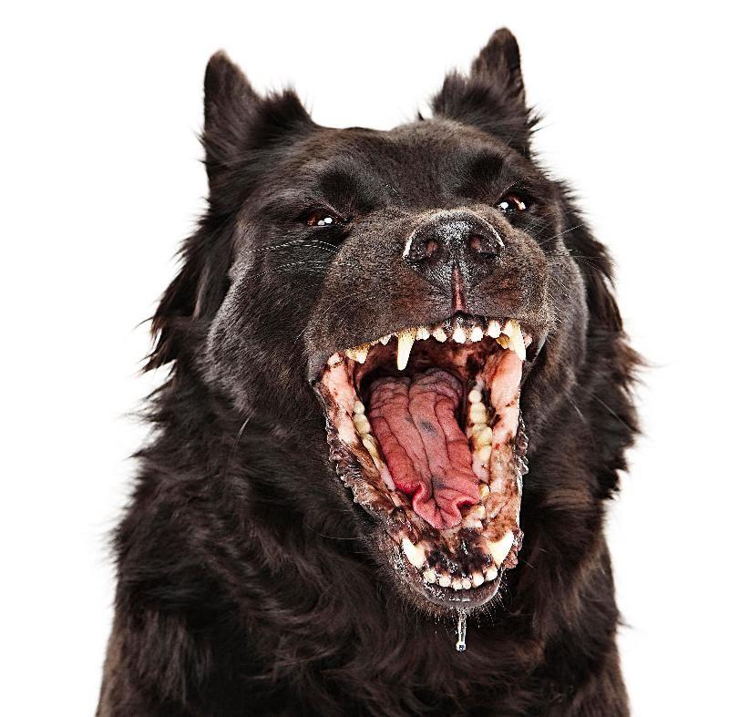Собака бывает кусачей… от жизни собачей?