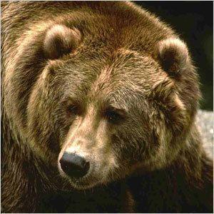 Пропавших детей задрал медведь?