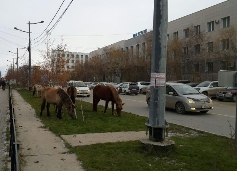 Об административной практике в отношении владельцев лошадей