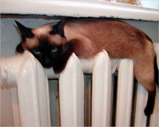 Как дела с теплом в Якутске?