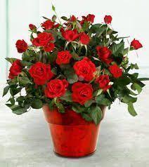Как сохранить цветущий подарок?