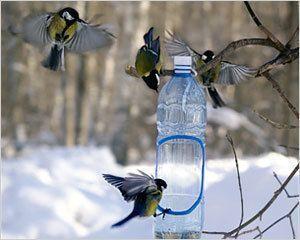 Стартует акция «Подкорми птиц!»