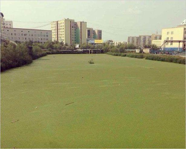 Город у воды.  Как облагородить наши болотца?