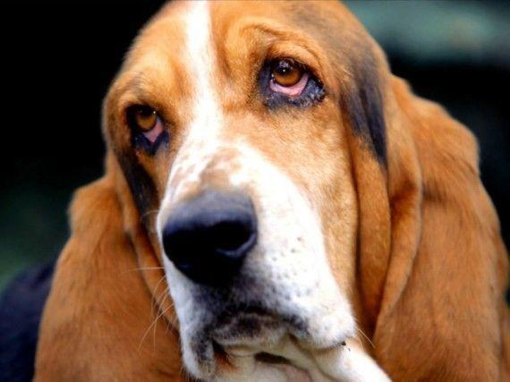 В Год добра подарим добро собакам!