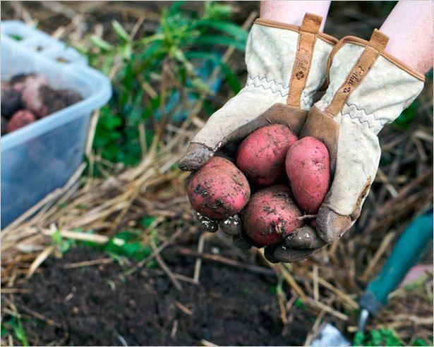 В Якутске завершается сельскохозяйственный сезон
