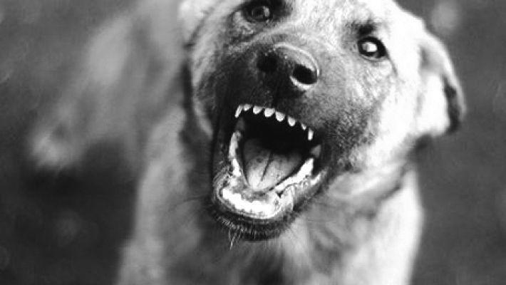 Бродячие собаки: как защититься и куда жаловаться?