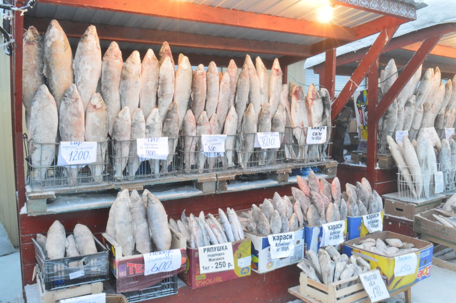 Почему в Якутске северная рыба дорогая