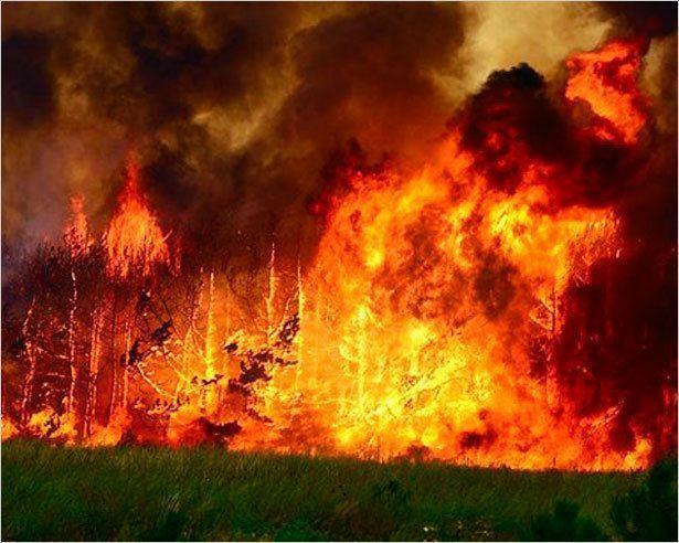 В городских лесах Якутска локализованы 5 пожаров