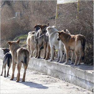 Что делать с бродячими собаками?