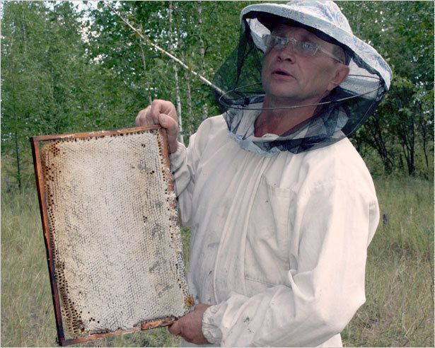 Японцы заинтересовались якутским медом