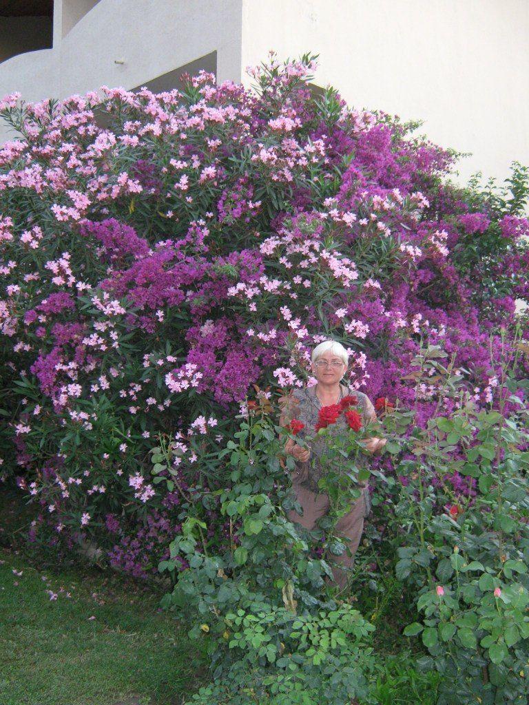 Милые людям цветы
