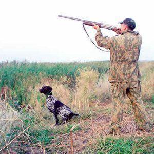 Правительство лимитировало охоту