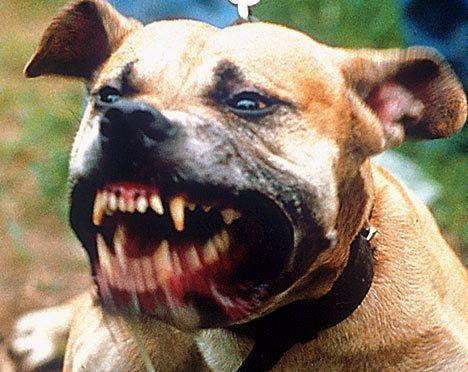 Смерть в челюстях собаки