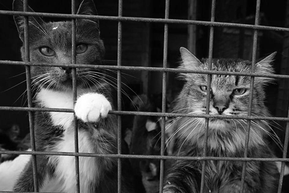 Кота не трожь! Приставам могут запретить арест домашних животных