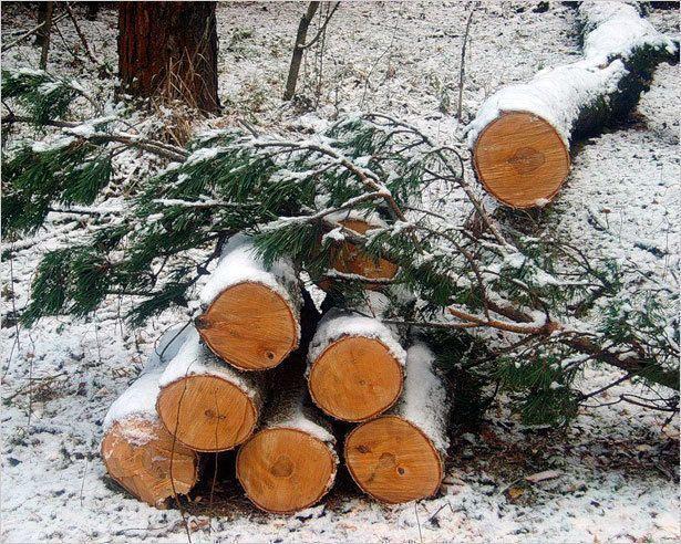 Идет борьба с незаконнной вырубкой лесов