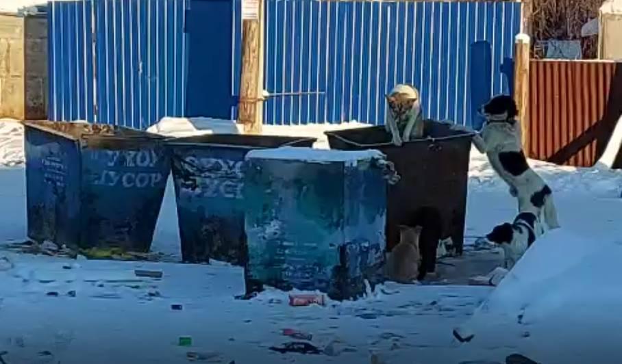 Три хозяйские собаки выловлены во время рейда на улице Очиченко в Якутске