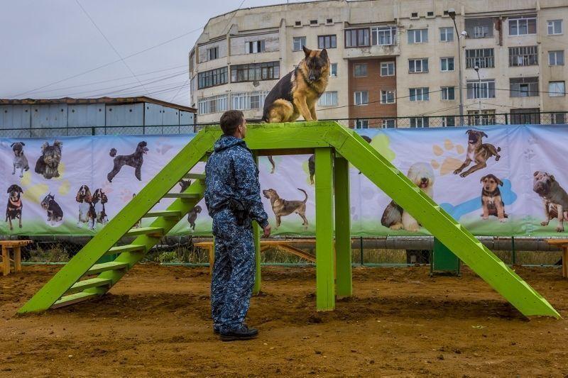 На 202 мкр открылась площадка для собак