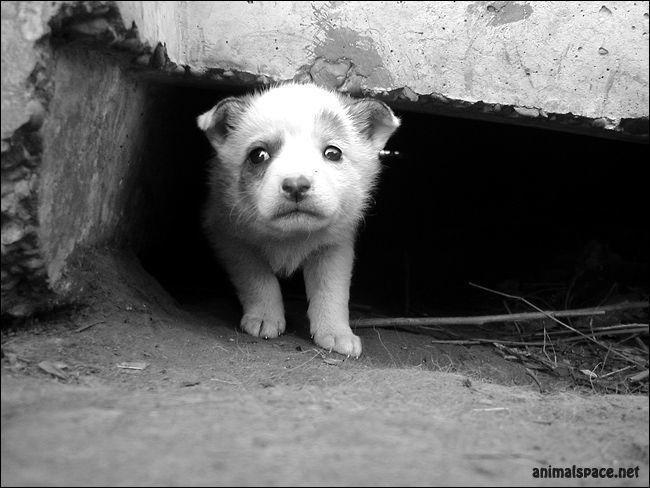 За жестокое обращение с животными грозит штраф